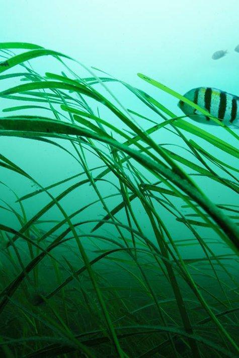 Thalasso - seaweed - 475x710