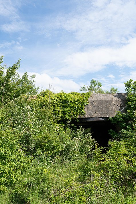 A WWII casemate hidden behind the vegetation of Mont-Canisy